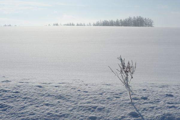 雪原を撮ること自体はそんなに難しくはありません。問題はそこまで行くことなのです