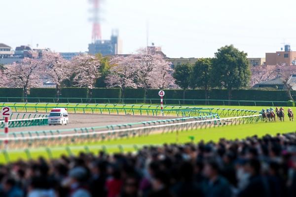 2010中山の桜
