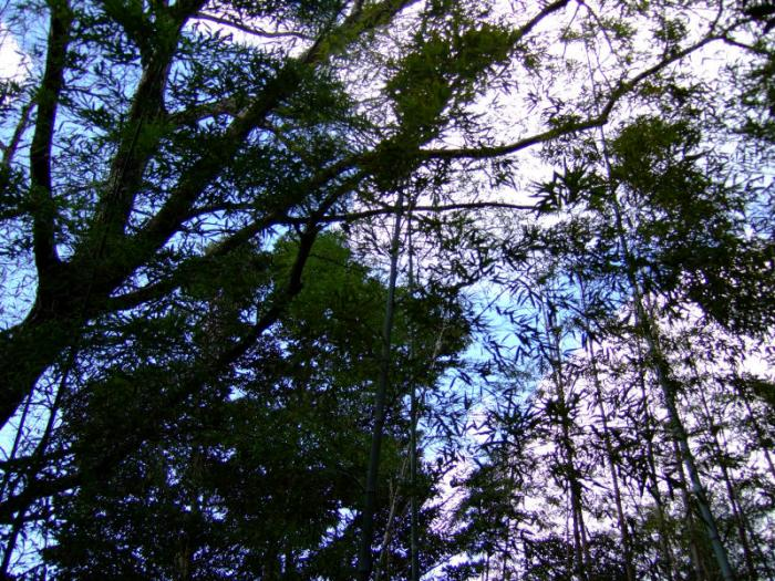 DSCF9314木々