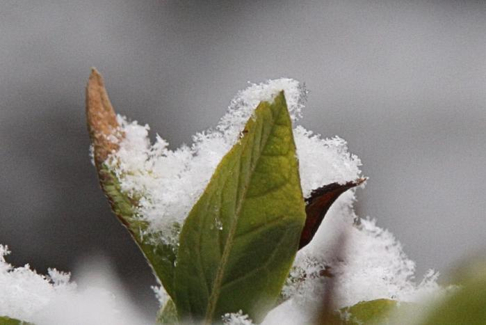 IMG_9422雪印
