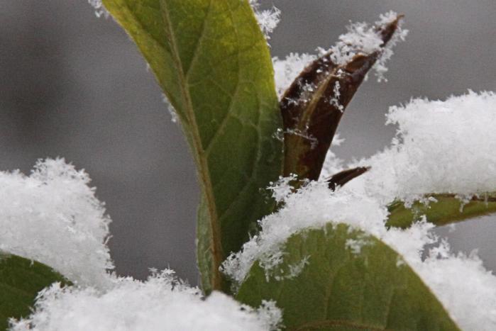 IMG_9460雪印