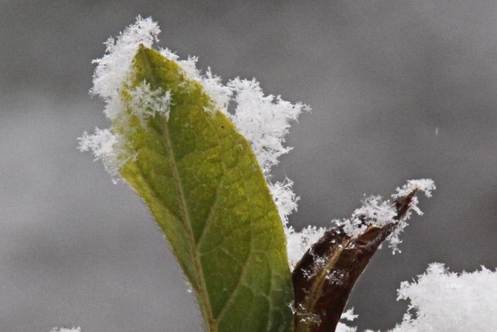 IMG_9509雪印