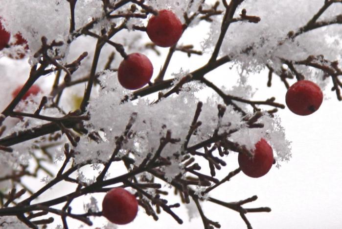 IMG_9592雪印と南天