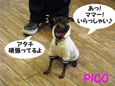 IMG_3109.jpg