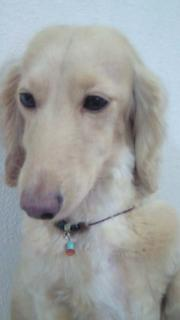犬ネックレスⅠ