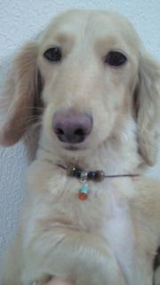 犬ネックレスⅡ