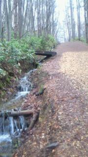 森の時計までの道