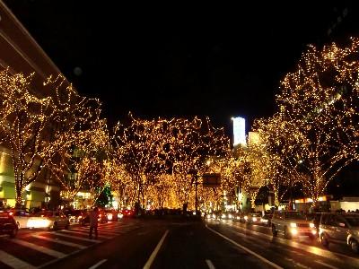仙台イルミ街路樹
