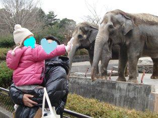 八木山象2