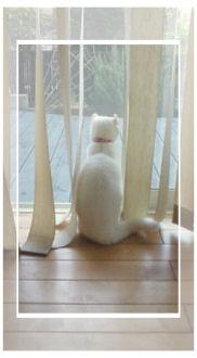 窓眺めバニf