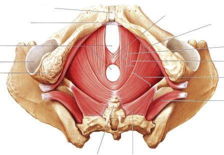 骨盤底筋7