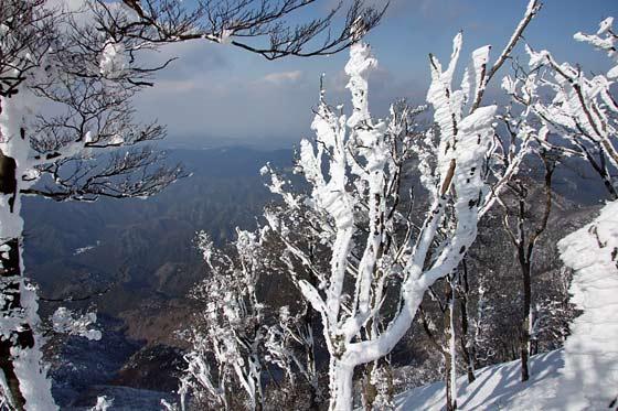 高見山 樹氷3