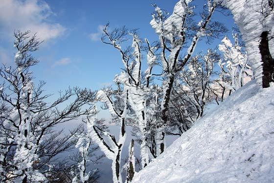 高見山 樹氷2