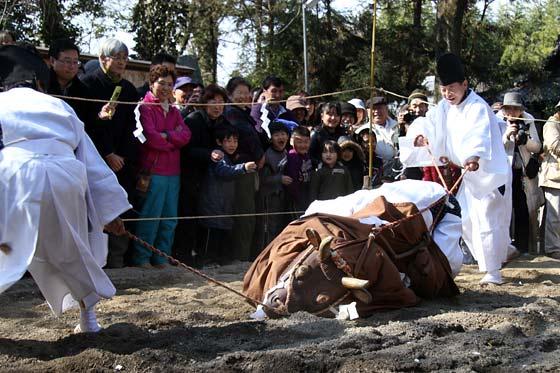 鏡作神社 御田植祭3
