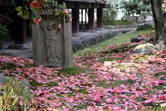 伝香寺 散り椿