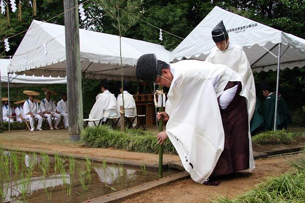 大神神社 御田植祭4