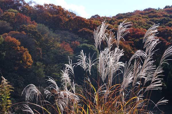 生駒山 紅葉2