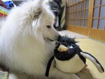 ペンギンだって・・・