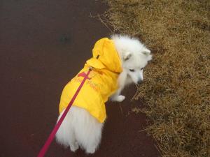 雨なのに・・
