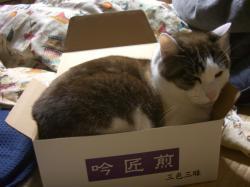 箱だ~~!