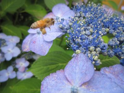 28ミツバチ1