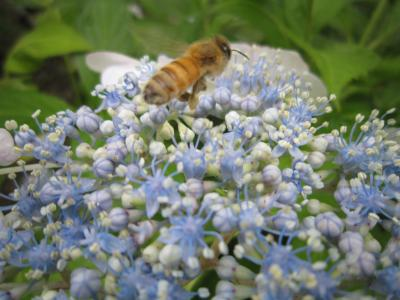 28ミツバチ