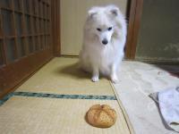 パンですか?