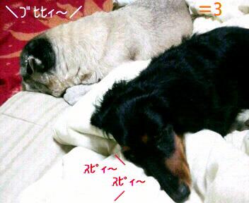 20100101064431.jpg