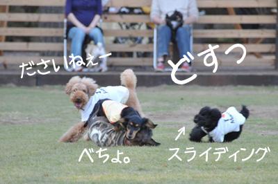 ぴよち災難2