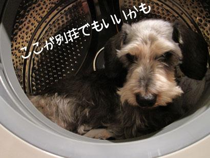 はるおin洗濯機
