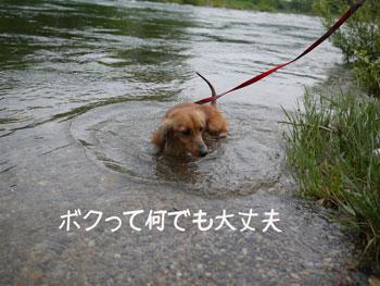 Q at 川