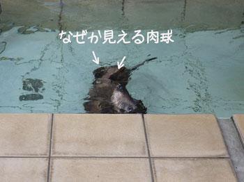 ぴよちの悲劇5