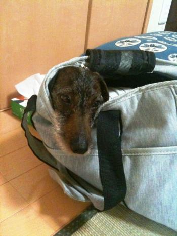 ガブin bag