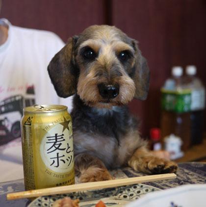 ビールとはるお