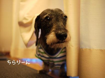 モデル犬2