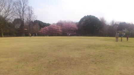 2013-03-17-01 桜
