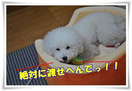 DSC_1105.jpg