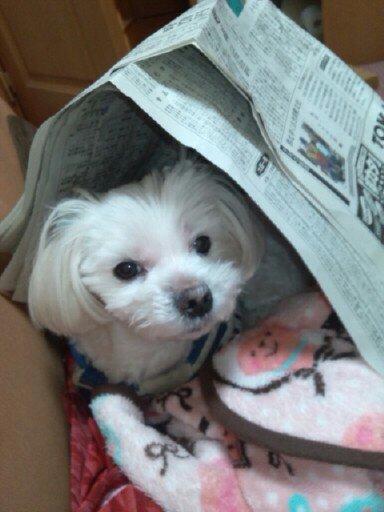 新聞紙・・・