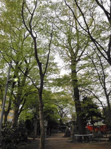 4月末新緑