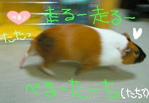 走りまっせ~(o^-^o)
