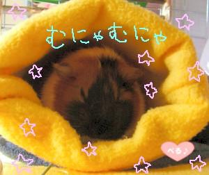 朝は眠いにょ☆ミ