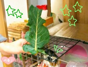 ブロッコリーツリー☆ミ