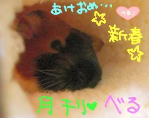 表紙(・(エ)・)