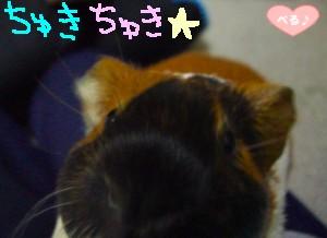 ちゅきちゅき-☆
