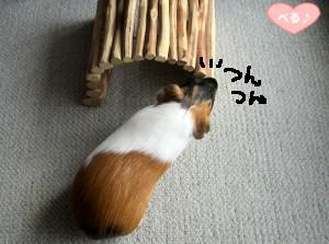 +トンネルと姫+