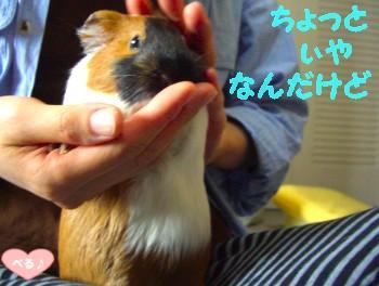 オコジョべる☆