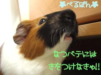 べるぽん(*^^)v