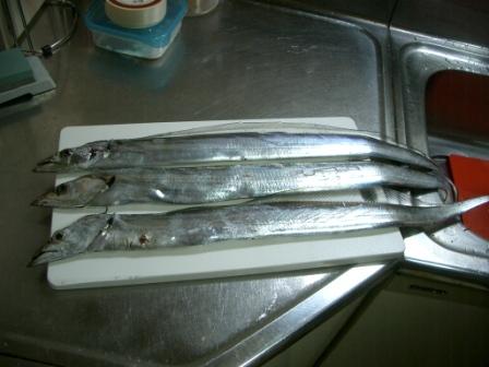 211121太刀魚