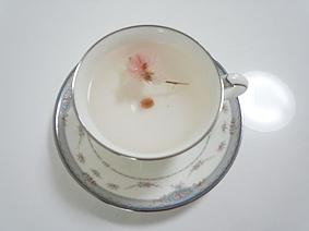 桜茶20130327