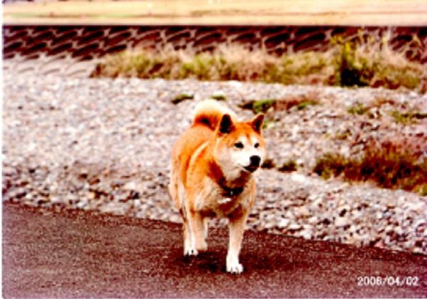 yuki_0.jpg